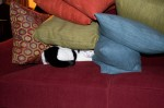 Kitty hiding in the pillows