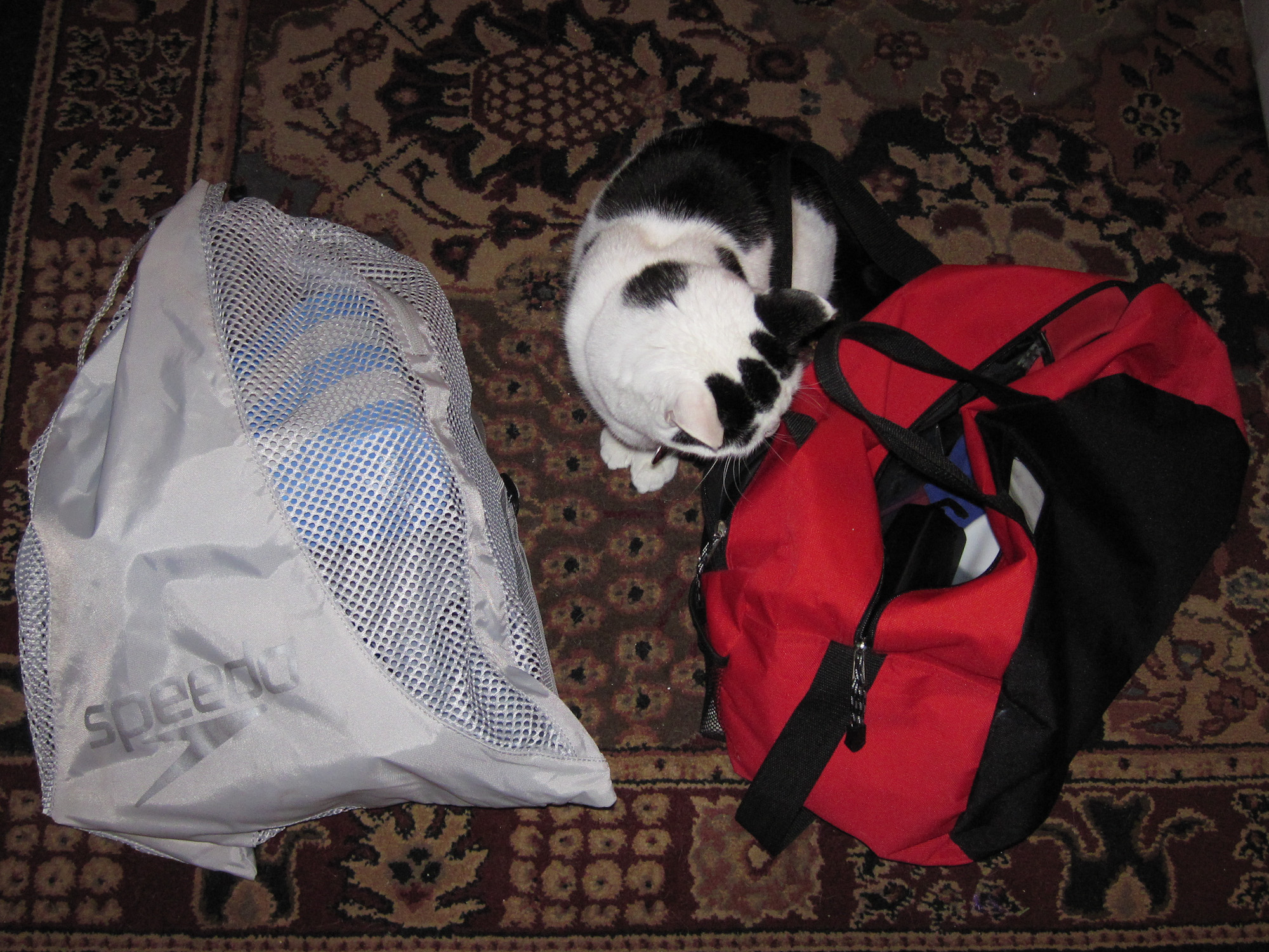 Swim bags... with cat