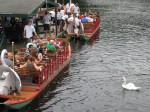 Swans and swan boats