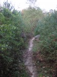 Narrow path between forest and park