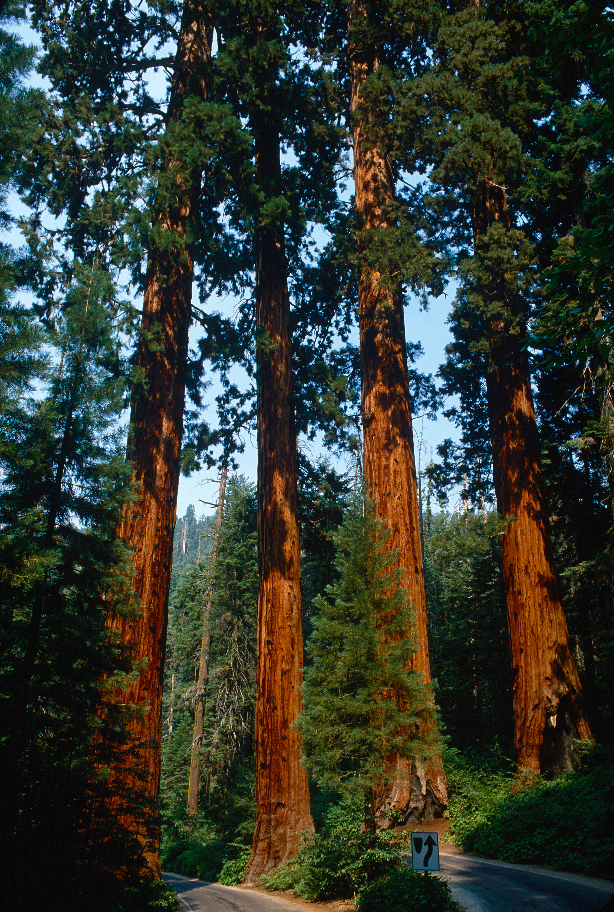 Four Guardsmen; Sequoia NP, CA - July 2002