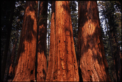 Sequoia and Kings Canyon